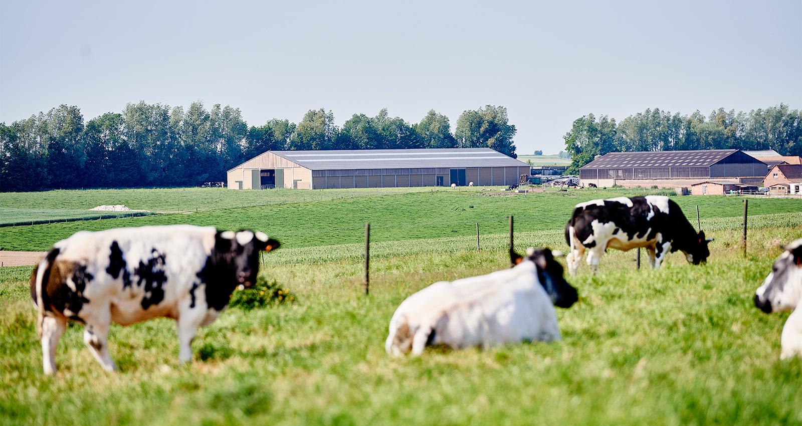 Etable pour taureaux d'engraissement