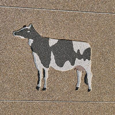 Etable pour vaches laitières